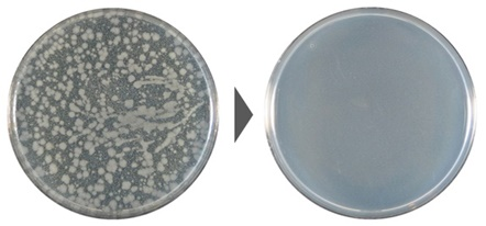 大腸菌の除菌効果試験結果の写真