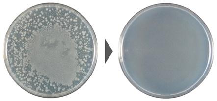 サルモネラ菌の除菌効果試験結果の写真