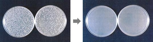アルカリ電解水を噴霧前と噴霧後の大腸菌