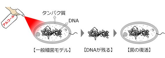 アルコールでは菌のDNAが残るので復活する絵