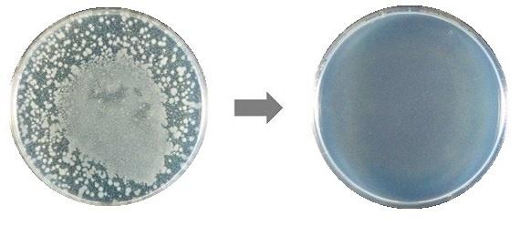 除菌前と除菌後のサルモネラ菌