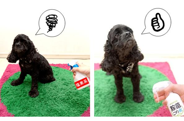 塩素系を嫌がり「除菌に・この水」に喜ぶ犬